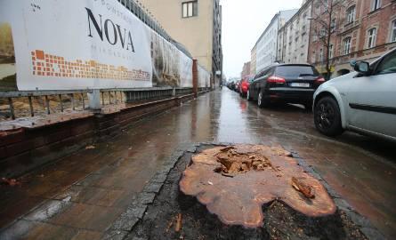 Wycięte kasztanowce przy Raciborskiej w Katowicach