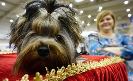 Na wystawie można podziwiać psy będące przedstawicielami około 260 ras.