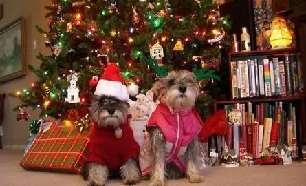 Psy bywają delikatne. Nie eksperymentujmy z karmieniem ich świątecznym jedzeniem
