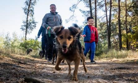 30.09.2018 bydgoszcz schronisko dla psow spacer rafal bruski pies .  fot: tomasz czachorowski/polska press