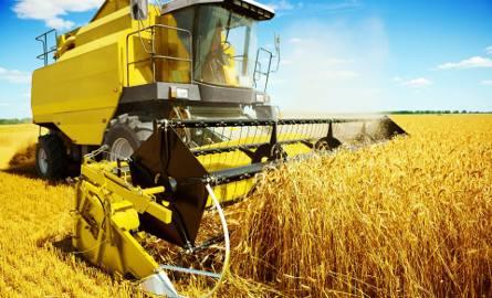 Rozpoczęły się małe żniwa. Rolnicy sygnalizują, że plony są słabe, a w skupach płacą mniej