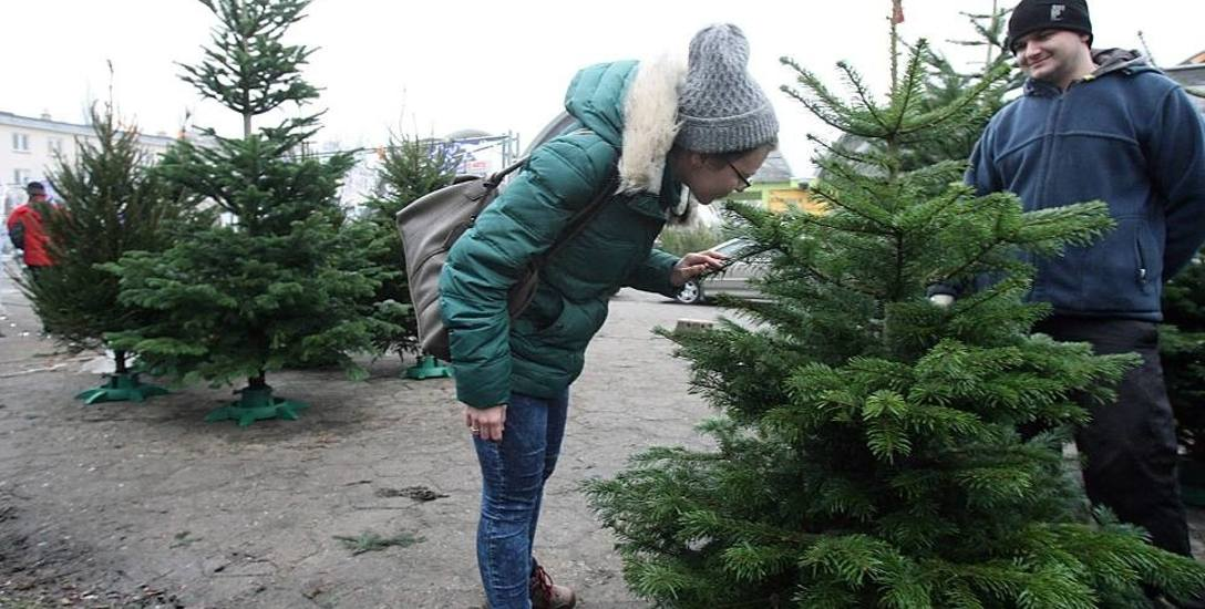 W tym roku mieszkańcy województwa łodzkiego wydadzą nawet 24 mln zł na zakup choinek