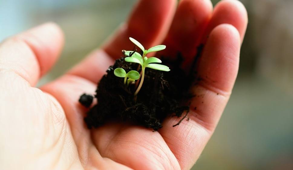 Film do artykułu: Dopłaty do wapnowania gleb 2019. Trwa nabór wniosków