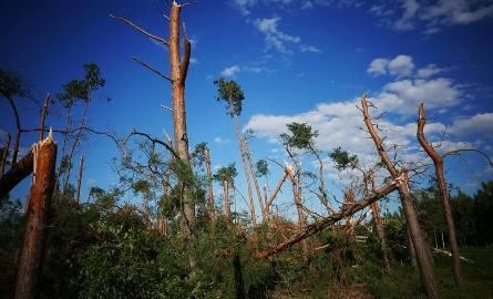 W lasach Kujawsko-Pomorskiego jeszcze nigdy nie było takich zniszczeń