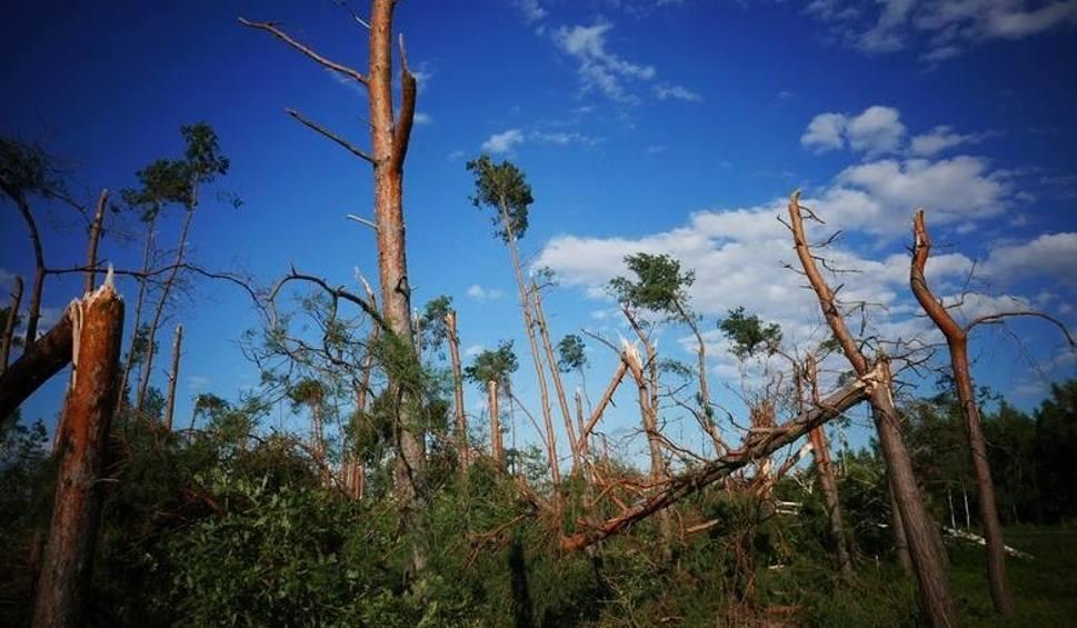 Film do artykułu: W lasach Kujawsko-Pomorskiego jeszcze nigdy nie było takich zniszczeń
