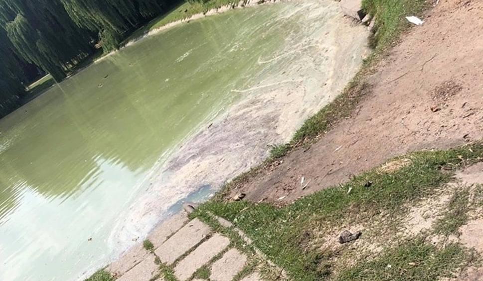 Film do artykułu: Uwaga! Woda w stawie w Parku Miejskim zanieczyszczona. Dlaczego?