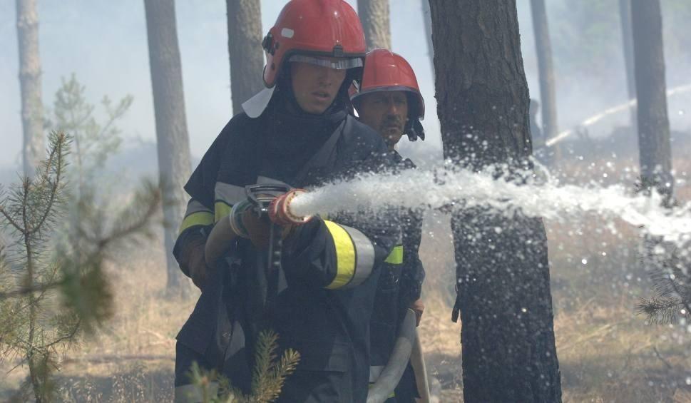 Film do artykułu: Ostrożnie z ogniem! Zagrożenie pożarowe w szczecińskich lasach
