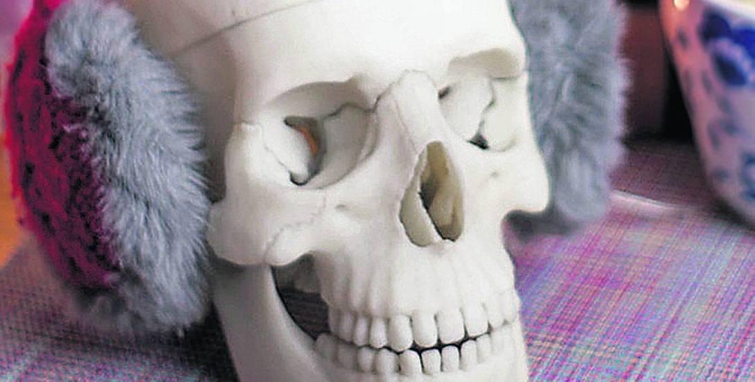 Czaszka do nauki anatomii stworzona przez śląskich studentów