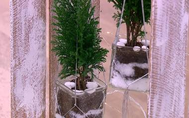 Żywe dekoracje świąteczne. Jak je zrobić i pielęgnować? Jak ozdobić dom na Święta?