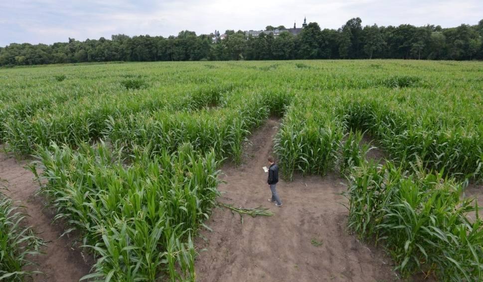 Film do artykułu: Sienkiewicz w labiryncie z kukurydzy. Zobacz zdjęcia i film