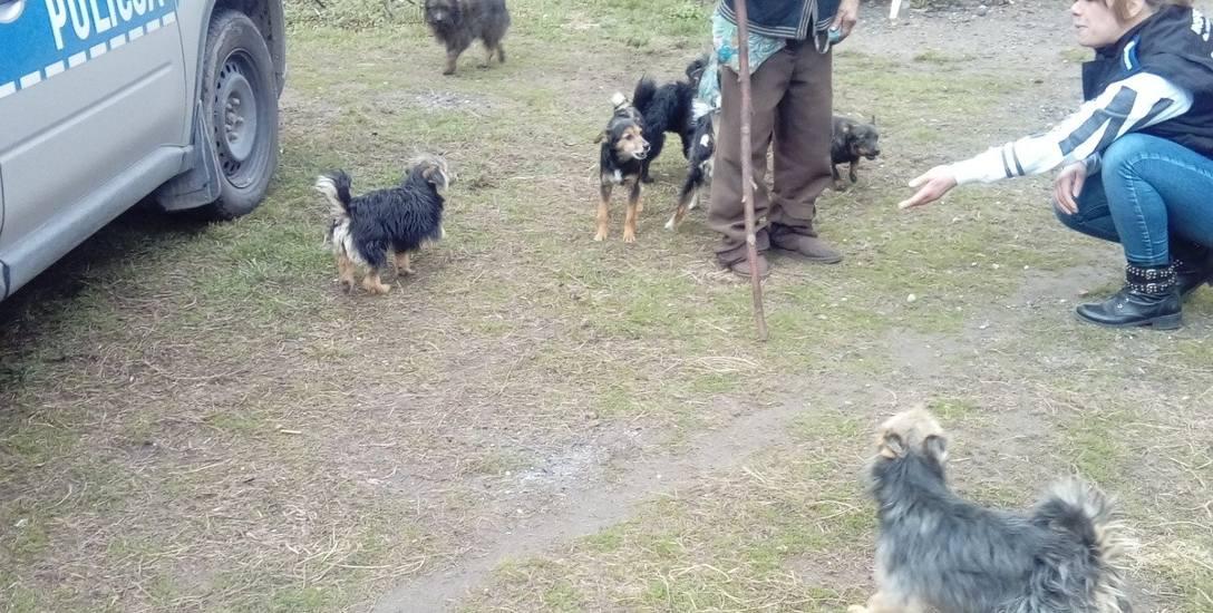 Ponad 20 psów zgromadzonych było na podwórzu posesji starszej kobiety, która mieszka w koszmarnych warunkach