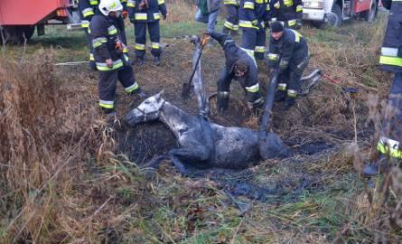 Nietypowe zgłoszenie dotarło w niedzielę (18 listopada) do Komendy Powiatowej Państwowej Straży Pożarnej w Nakle nad Notecią. W Zamościu do rowu melioracyjnego