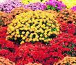 WIERSZYKI, WIERSZE DLA MAMY - piękne życzenia na DZIEŃ MAMY. Nie zapomnij złożyć życzeń mamie [23.05.18]