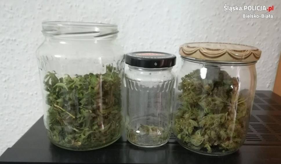 Film do artykułu: 200 porcji marihuany w domu 36-latka z Bielska-Białej. Sprawca trafił do policyjnego aresztu, usłyszał już zarzuty