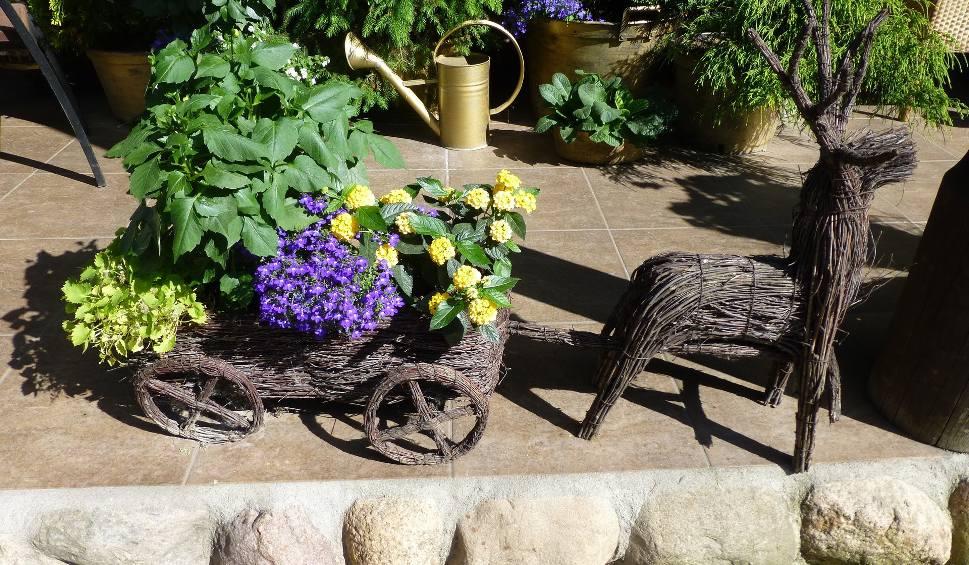 Film do artykułu: Mała architektura w ogrodzie – jak uniknąć kiczu. Poradnik