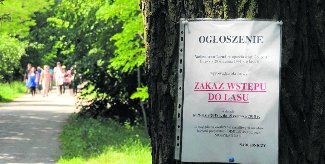 W okolicach Wrzosów i Barbarki leśnicy zwalczali gąsienice strzygoni choinówki - stąd zakaz wstępu do lasu