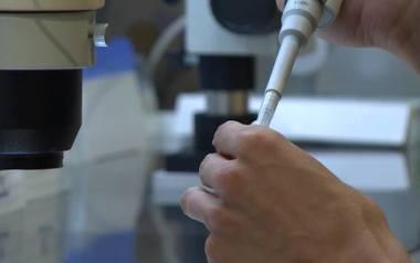 In vitro w Szczecinie: Program miejskiego leczenia niepłodności metodą in vitro trafił do oceny