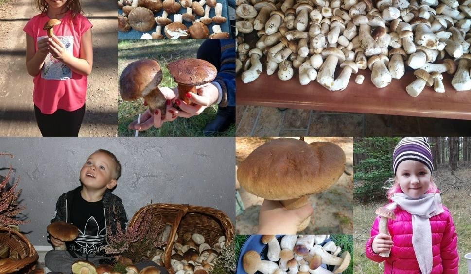 Film do artykułu: Grzybobranie 2019 w Lubuskiem. W naszych lasach obrodziło. Macie pełne kosze i bagażniki. Są borowiki, maślaki, kozaki [ZDJĘCIA CZYTELNIKÓW]
