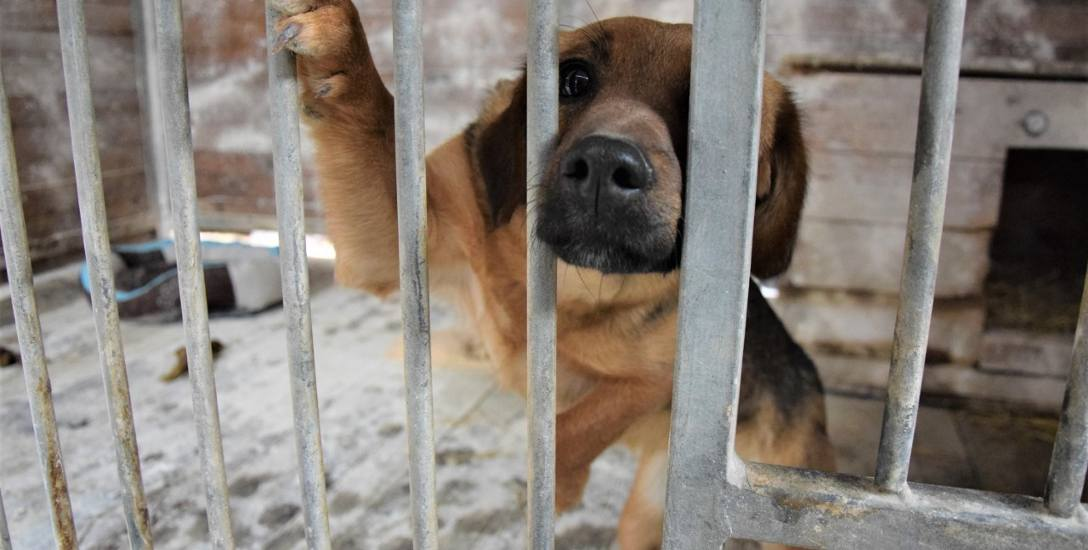 Bezdomne psy czekają na nowe schronisko, by mogły przebywać w godnych warunkach