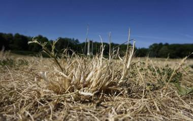 """Klęska suszy zagraża pomorskim rolnikom. """"Pogoda w ostatnich latach staje się nieprzewidywalna"""""""
