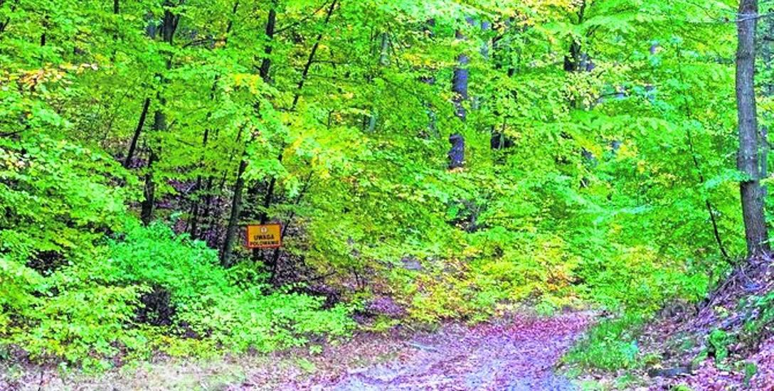 Tabliczka informująca, że w lesie odbywa się polowanie, była umieszczona rzeczywiście w dość mało widocznym miejscu