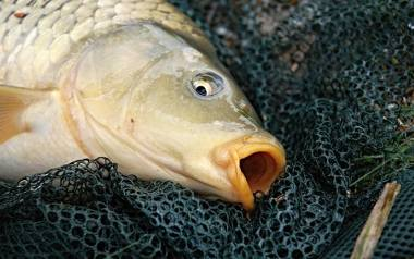 Ryby. Fundujemy im prawdziwe tortury, a one też odczuwają ból