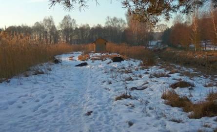 Dziki wpadły pod lód: akcja ratownicza powiodła się połowicznie. Uratowano sześć z ośmiu dzików. Na miejscu pracowały cztery zastępy