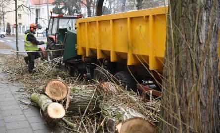 Masowa wycinka drzew trwa w całym kraju