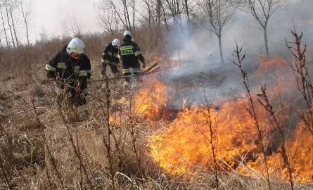 Pożar w Sosnowcu: Pali się torfowisko w rejonie kolonii Wągródka
