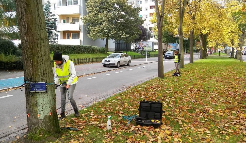 Film do artykułu: W Kołobrzegu badają drzewa tomografem