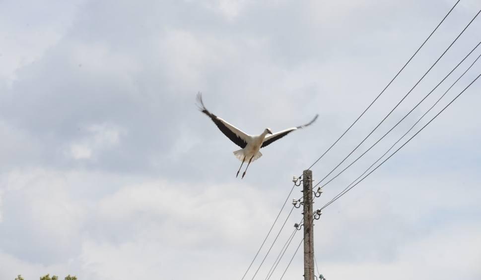 Film do artykułu: Przerwy w dostawie prądu. Zobaczcie gdzie [18-22 lutego]