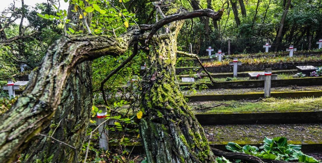 Teren cmentarza z okresu II wojny światowej znajdującego się w Smukale przy ul. Baranowskiego w czasie ostatnich wichur i nawałnic został dosłownie zdemolowany