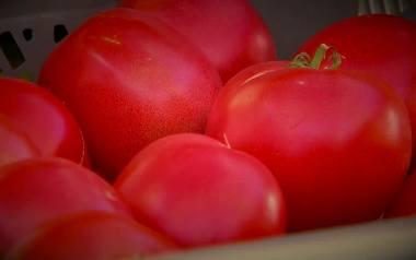 5 powodów, dla których warto jeść pomidory [WIDEO]