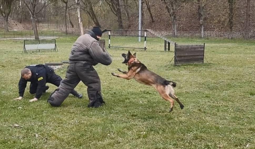 Film do artykułu: Międzynarodowy Dzień Psa 01.07.2020 r. To nie tylko wierni przyjaciele. Te psy policyjne pomagają ratować ludzkie życie! [zdjęcia, film]