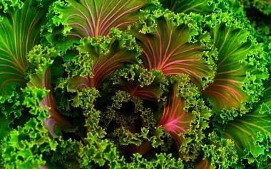 Zestaw ten powtarza się praktycznie co roku, a poszczególne owoce i warzywa de facto przeważnie zamieniają się miejscami, czasem poszerzając się o np.