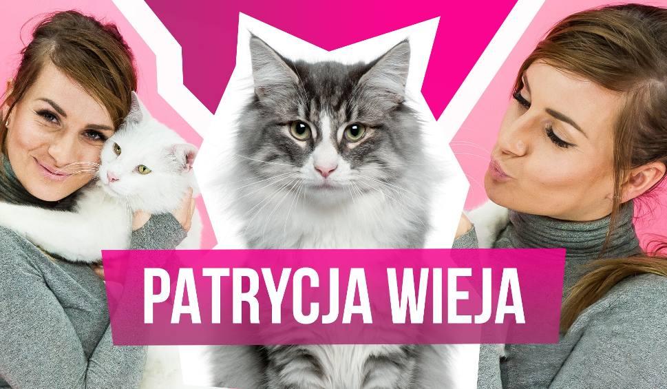"""Film do artykułu: Patrycja Wieja w programie """"MiauCzat""""! Zwyciężczyni """"Projekt Lady"""" wystąpi w nowej edycji """"Big Brothera""""?"""