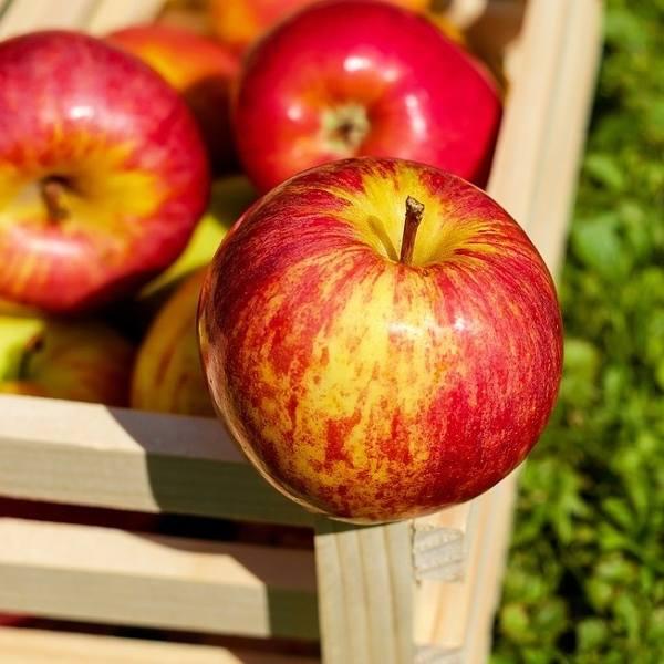 Interwencyjny skup jabłek w Świętokrzyskiem. Punkty i sadownicy nadal nie mają pieniędzy, ministerstwo rolnictwa umywa ręce