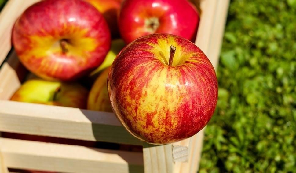 Film do artykułu: Interwencyjny skup jabłek w Świętokrzyskiem. Punkty i sadownicy nadal nie mają pieniędzy, ministerstwo rolnictwa umywa ręce