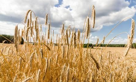 Do 29 listopada wydłużono termin składania wniosków o udzielenie dotacji dla producentów rolnych.