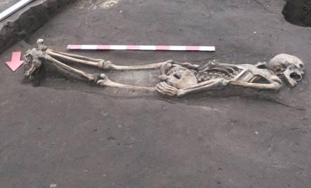 Jeden z nietypowych pochówków odkrytych na Śródce - mężczyzna został złożony do grobu na brzuchu