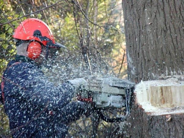 Kto wyciął wiekowe drzewa na przedmieściach uzdrowiska?