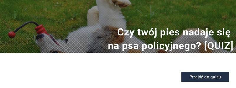 Komisarz Alex czy Cywil? Czy twój pies nadaje się na psa policyjnego? [QUIZ]
