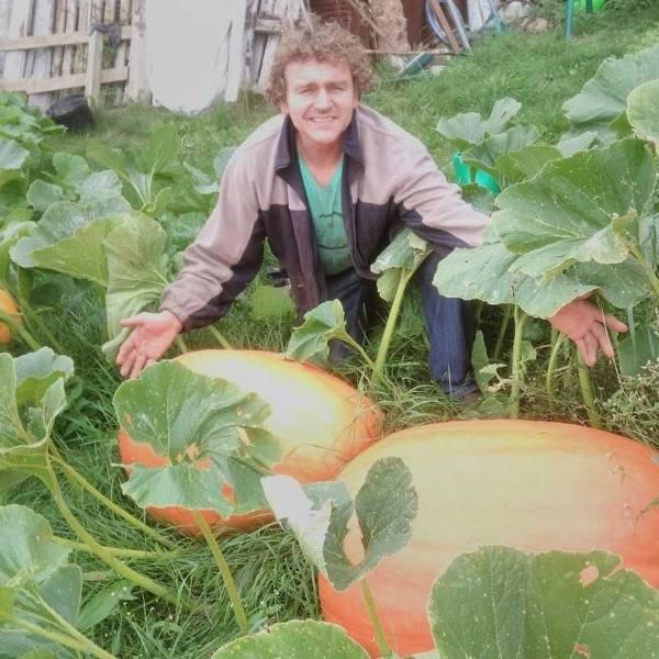 Skrybicze. W ogródku pana Andrzeja wyrosły olbrzymie dynie (zdjęcia)