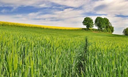 Modernizacja gospodarstw rolnych 2019. Kiedy wnioski? Termin naboru ogłoszony