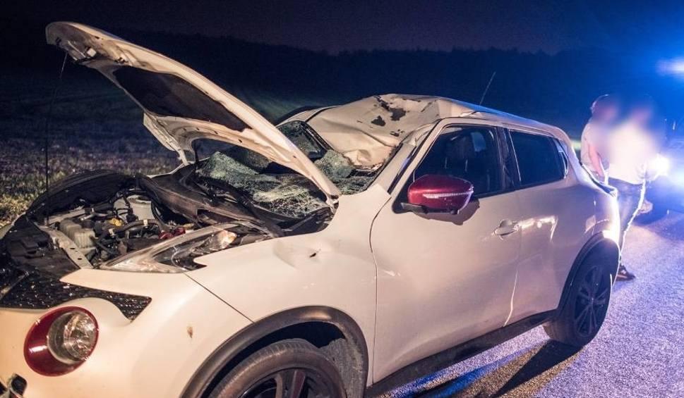 Film do artykułu: Gołanice: Jeleń spadł na samochód po zderzeniu z innym autem [ZDJĘCIA]