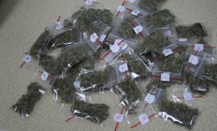 Policja zabezpieczyła sto działek marihuany w domku jednorodzinnym w Białych Błotach [wideo]