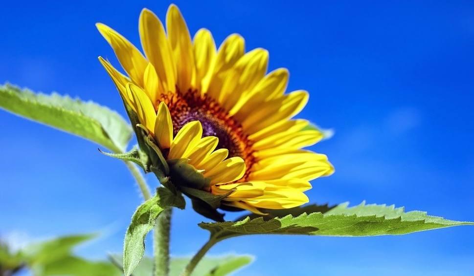 Film do artykułu: Program Słonecznik. Pożyczą na wymianę okien, docieplenie - termin naboru przedłużony
