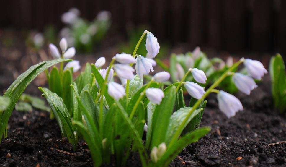 Film do artykułu: Idzie wiosna! Eksperci nie mają wątpliwości