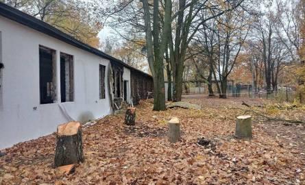 Klub Przyrodników Koło Poznańskie poinformował, że w parku przy Grunwaldzkiej 55 rozpoczęła się wycinka drzew i krzewów pod  budowę Centralnego Zintegrowanego