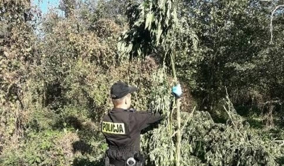 Film do artykułu: 140 kilogramów narkotyków przejęli nasi policjanci pod Buskiem!